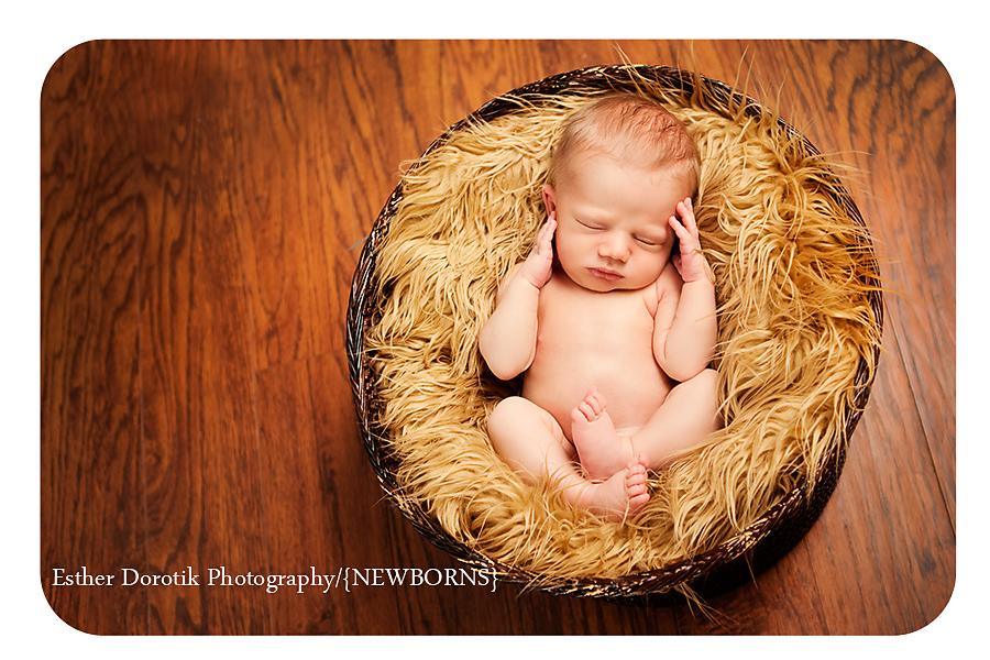 newborn in basket with brown fur
