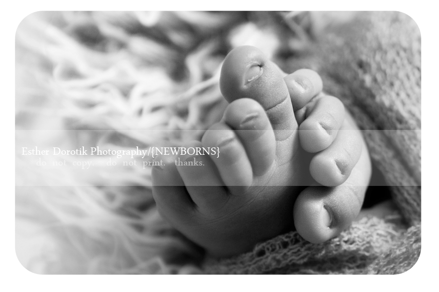 Close up of baby feet taken by frisco