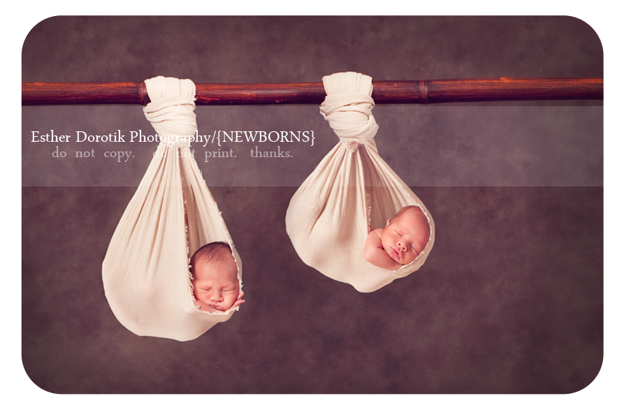 Popular newborn pose twins hanging from branch