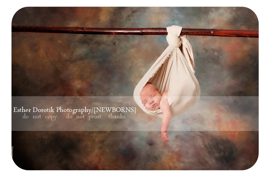 Frisco-newborn-photographer-captures-baby-boy-hanging-from-tree-branch