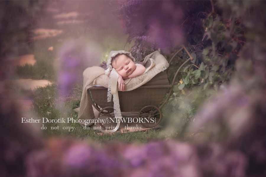 Outdoor newborn photography with purple flowers in baby